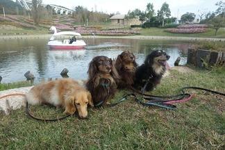 犬連れ 淡路島国営明石海峡公園