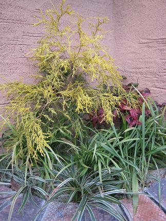 花壇の植裁