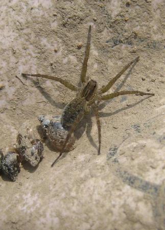 蜘蛛・・・