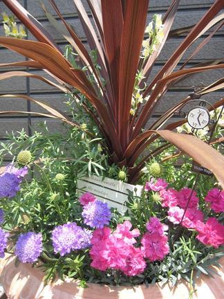 緑の小部屋の植物たち