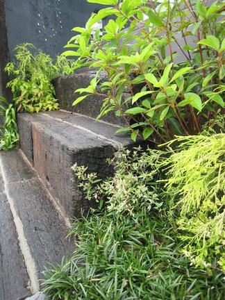 枕木階段脇の植物