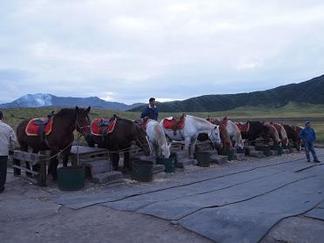 草千里の馬たち