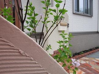 壁面越しに眺めた植物