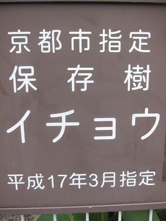 京都市指定保存樹