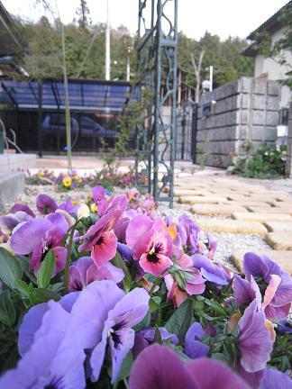 お庭のお花を眺めて