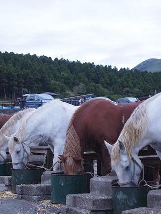 馬の食事風景