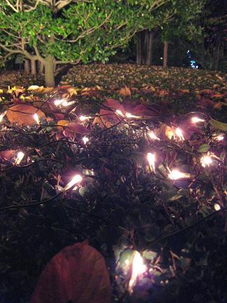 落ち葉の中のイルミネーション