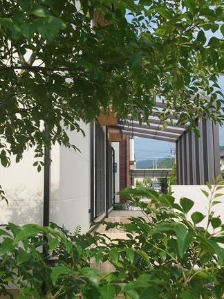 シマトネリコ越しに眺めるココマ
