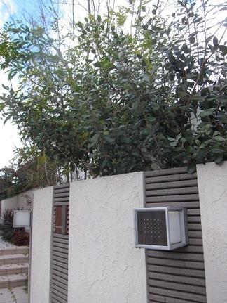 門柱背面の植栽