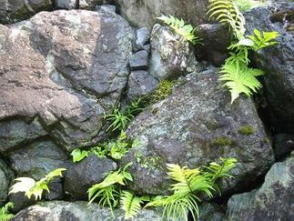 お庭の中の石積み