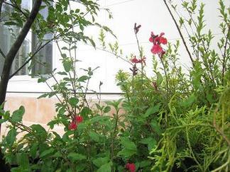 テラスを彩る植物たち