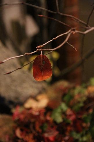 1枚の葉っぱ