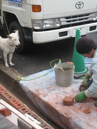 スタッフと犬