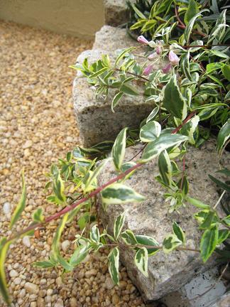 ピンコロ石積みの花壇