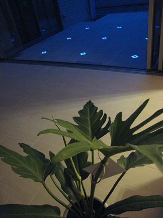 リビングの植物