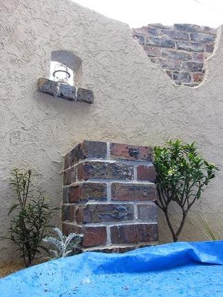 壁面を彩る植物
