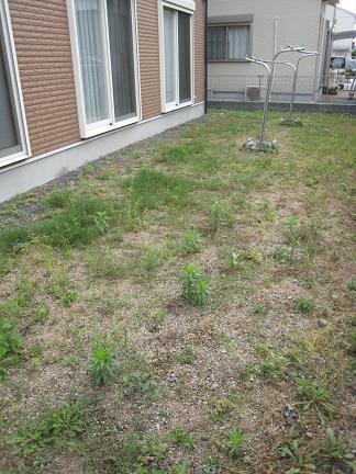 施工前のお庭「ビフォー」