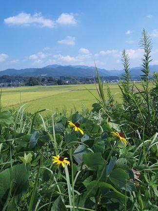 目の前に広がる田園風景