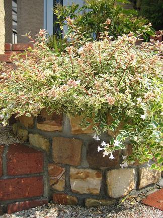 砂岩ピンコロ石積みの花壇