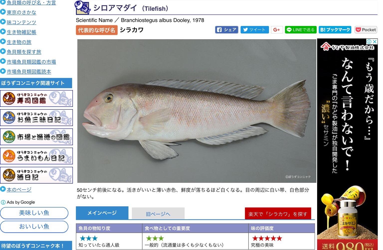幻の高級魚・白甘鯛とは(撮影:中野龍三)。