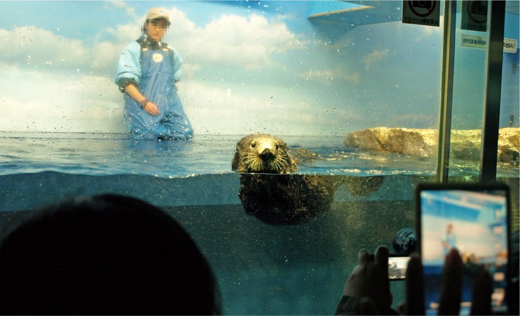 サンシャイン水族館のラッコ。