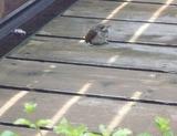飛来する鳥 (2)