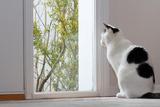 ペットと暮らす住宅
