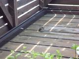 ウッドデッキに訪れる小鳥