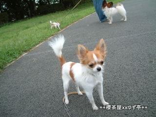 1-yuzu2004_09_05_16_10_520013