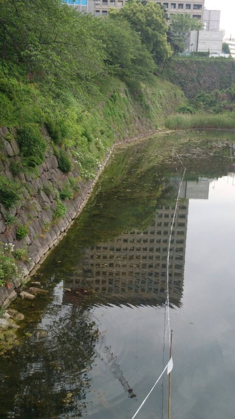 2015アフタースポーン弁慶堀 (6)