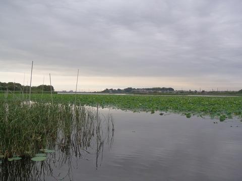 20150621ushiku (1)