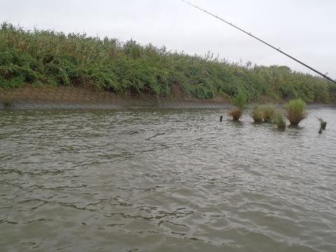 20150830tonegawa (2)