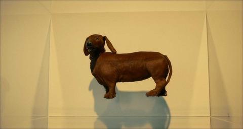 Wiener-Dog016