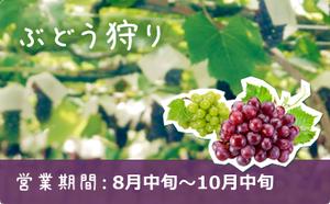 grape_season