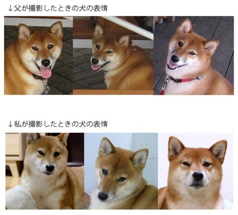 【画像】父が撮影した時の犬の表情と私が撮影した時の犬の表情