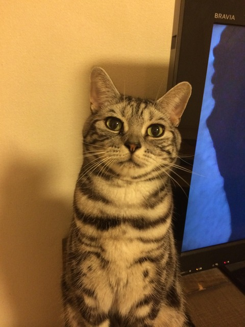 【画像】うちの猫が、完全にこっち見んななんだがwwww