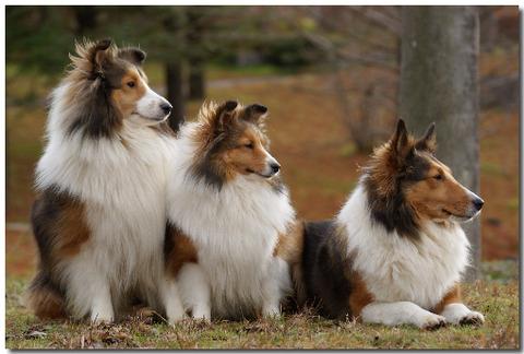 【画像】俺の好きな犬種wwwww