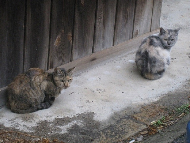 今日壁でじっとしてる猫見て思い出した話。猫好きな人には胸糞悪くなる話かも。   うちのジイサンの家は、猫屋敷と呼ばれるくらいに猫がいた。