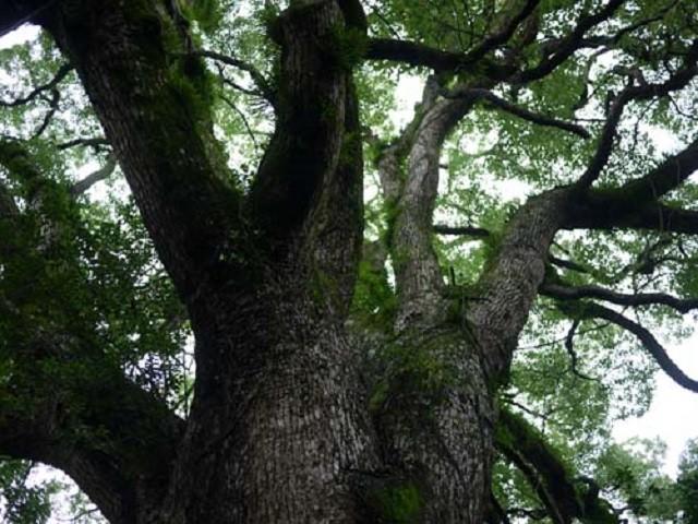 はあ・・・・・・聞いてくれ。  兄貴とオレは林業に携わっていて、よく業者からの依頼やたまに個人の依頼が来て山に木を切る為の書類と現地視察に行くのが主な業務。