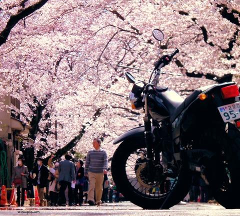 bike_8585