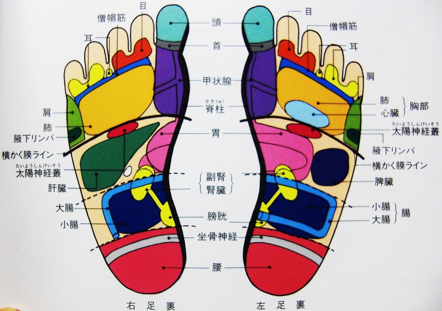How to Learn About Reflexology