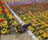 花がいっぱい