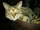 保護猫ミアちゃん