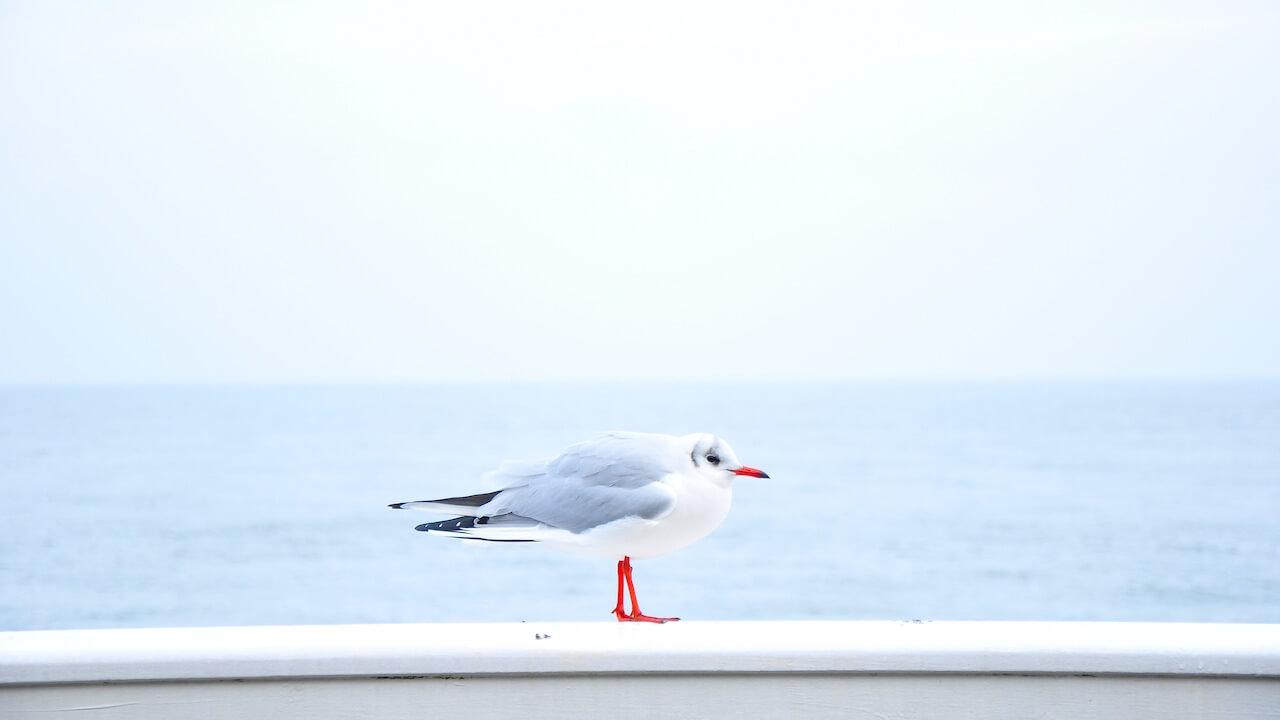 0527blue-bird