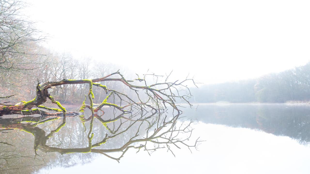 0708dead-tree