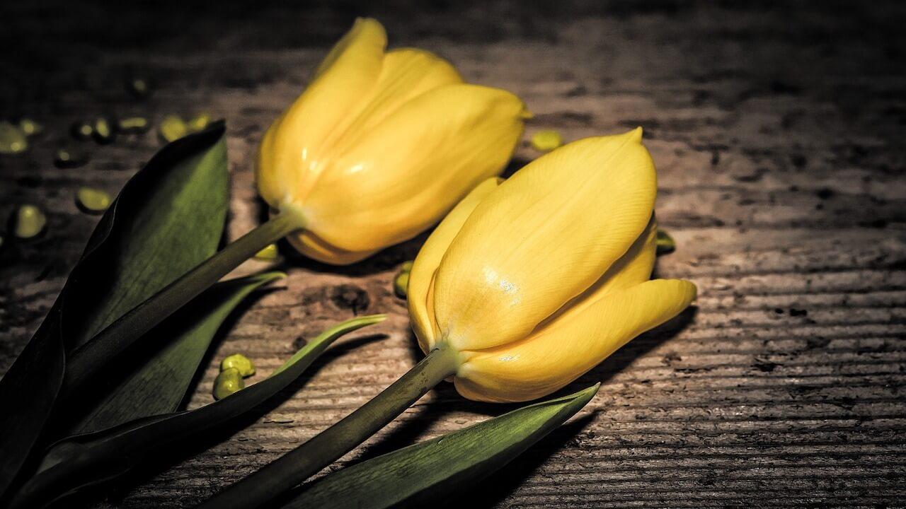 0723flowers-703977_1280