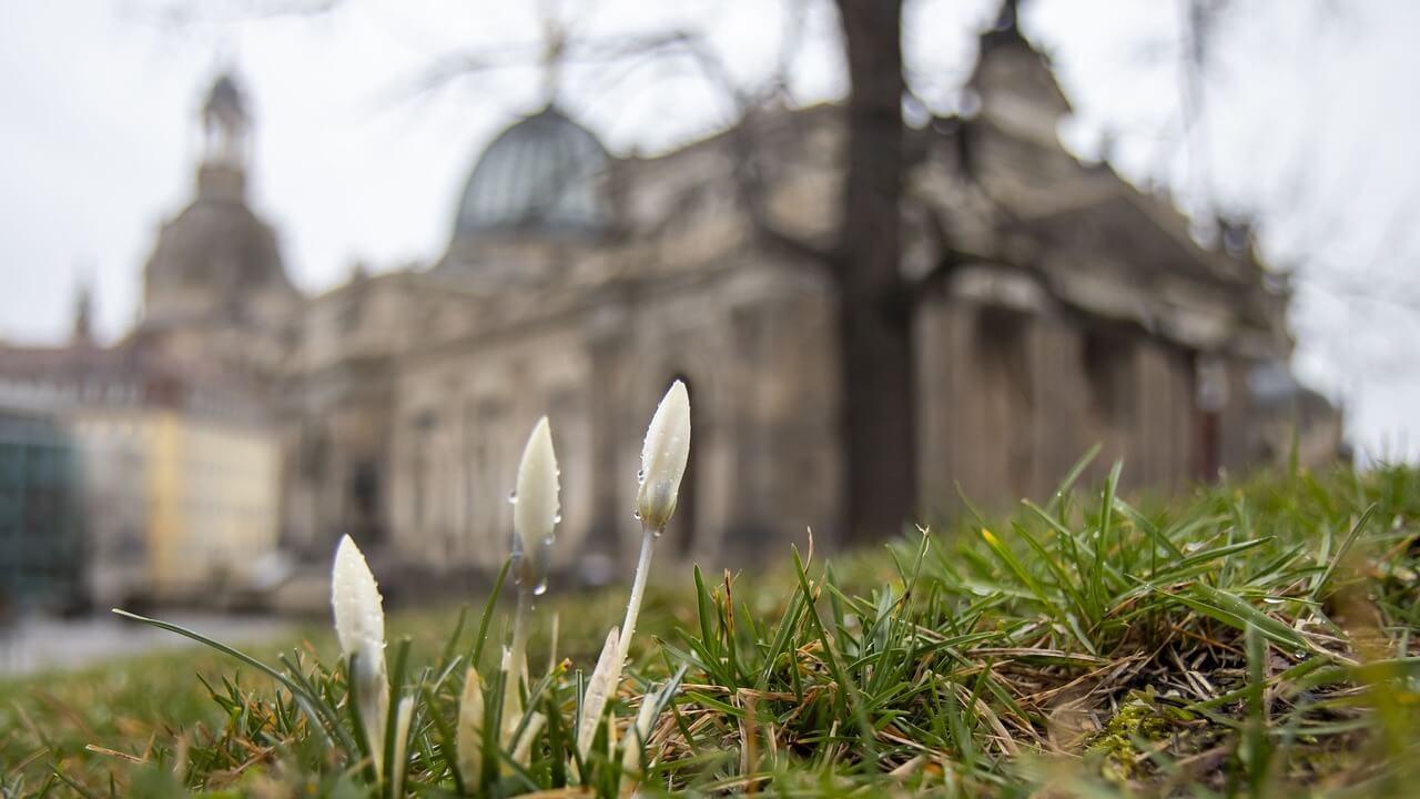 0618the-beginning-of-spring-4885642_1280