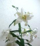 花を咲かせよう
