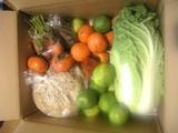 野菜と果物を貰った
