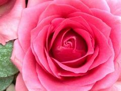 人生の花を咲かせよう